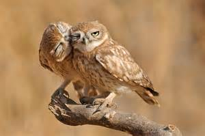 Owl Lover Owls My Hd Animals