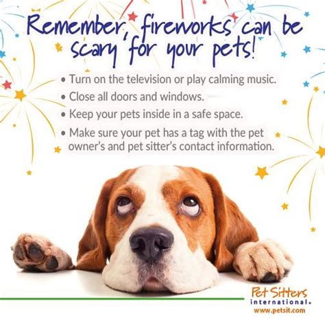 dogs and fireworks walking pet sitting running in home pet sitting walker pet sitter