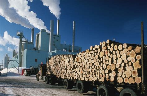 Paper From Wood Pulp - biomass wood paper bulk material engineering powder