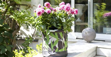 fiori da giardino invernali fiori invernali un sorriso nel gelo westwing dalani e