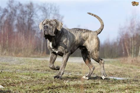 unique breeds 10 unique breeds you may not about pets4homes