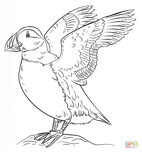 puffin bird coloring page atlantic puffin coloring page free printable coloring pages