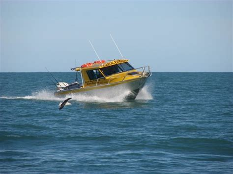 boat r kaikoura without a doubt the best fishing charter in kaikoura