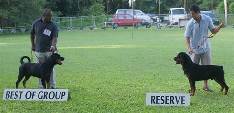 juffther rottweilers stuart mallard critiques dogs in barbados dogs in barbados