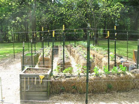 Straw Bale Garden Layout Straw Bale Garden One Gardener S Project Walter Reeves The Gardener