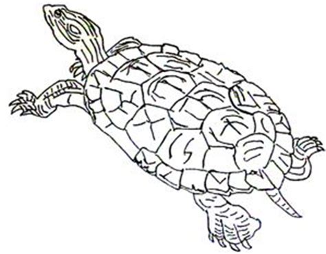 coloring page painted turtle wetlands habitat colouring pages