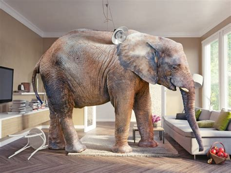 elephant in the living room facebook s latest blunder and the elephant in the living