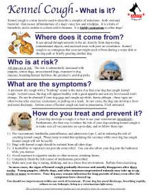 how to treat kennel cough at home pet info forms animal am emergency clinic