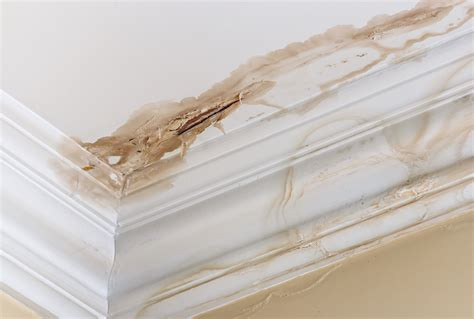 Ceiling Stains Water Damage by Roof Leak Find Repair Roof Leaks Now Modernize