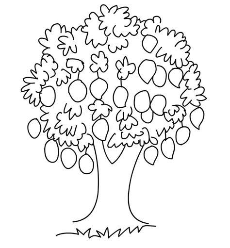narra tree coloring page lemon tree clipart black and white clipartxtras