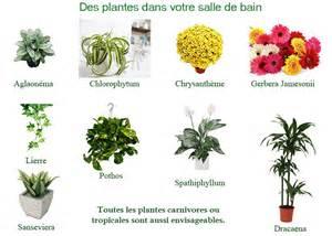 mobilier bain des plantes d 233 tox dans votre salle de bain