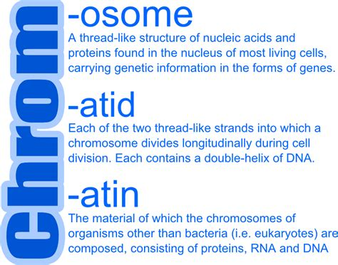 m protein definition what are the differences between chromosomes chromatids