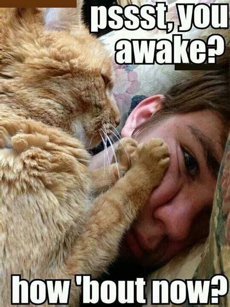 Morning Meme - morning meme awake now cutie patootieeees pinterest