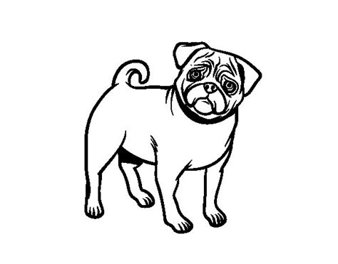 enlightened pugs coloring book books dibujo de perro carlino para colorear dibujos net