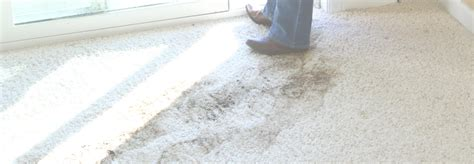 carpet steam cleaning grayhart s blog steam pro carpet cleaning meze blog