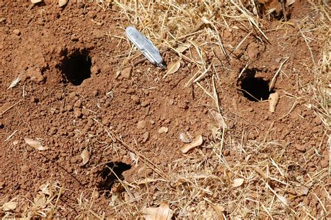 holes in backyard ground squirrel holes in yard www imgkid com the image kid has it