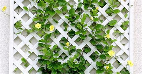 enrejado askholmen white lattice feature trellis with a colourful flowering