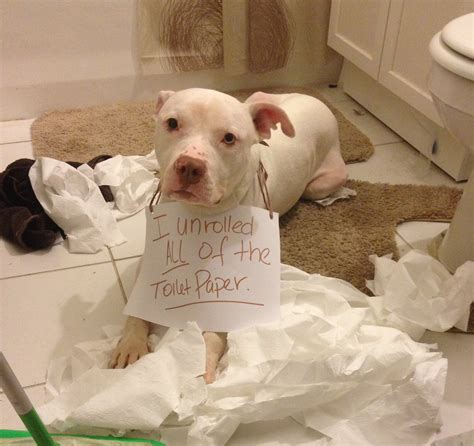 puppy toilet paper toilet paper frenzy