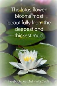 Lotus Flower Quotes Mud Lotus Flower Quotes Quotesgram