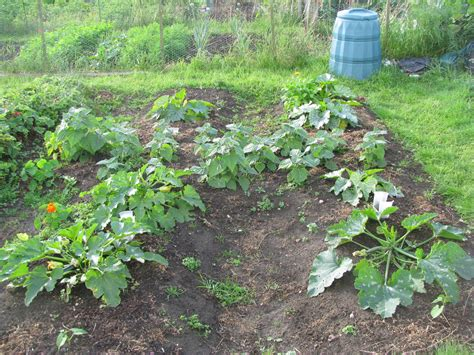 how to a to not dig to dig or not to dig how my allotment made the decision for me permaculture magazine