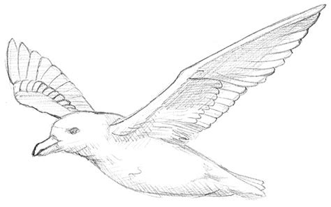 Pensil Alis Aubeau zeichnungen