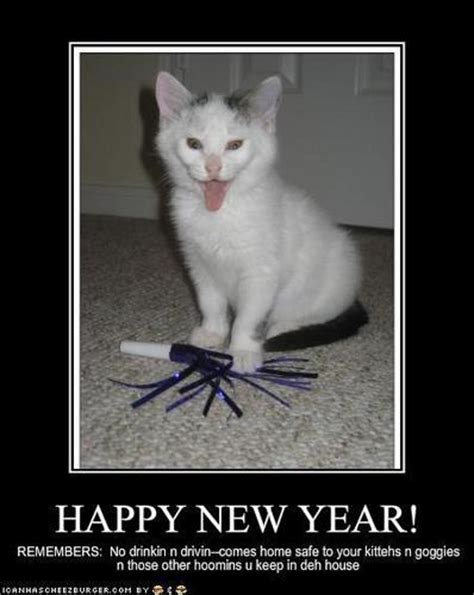 new year cat images lol cats images happy new year wallpaper and background