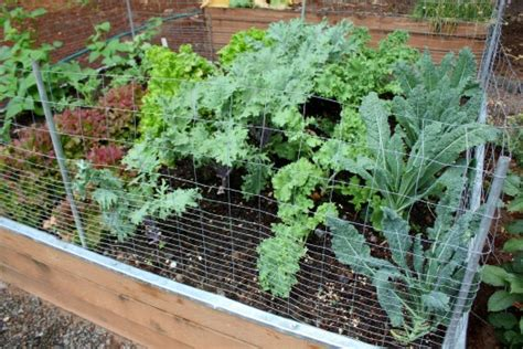 growing vegetables   pacific nw gardening