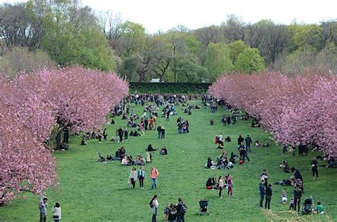 Brooklyn Botanic Garden Cherry Blossom Season 2017 The Cherry Blossom Botanical Garden