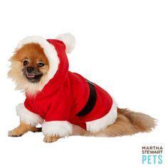 jacket petsmart martha stewart pets 174 bow collar collars petsmart my pets would like