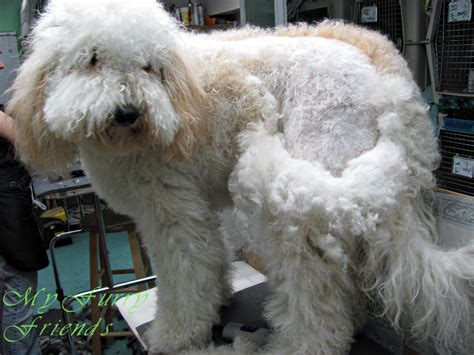 matted photos matted fur can lead to serious health risks live pant play