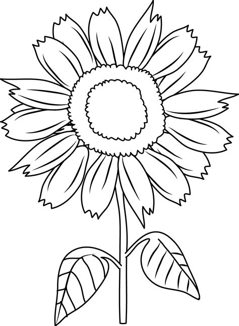Sunflower Outline Png by Pretty Sunflower Coloring Page Free Clip