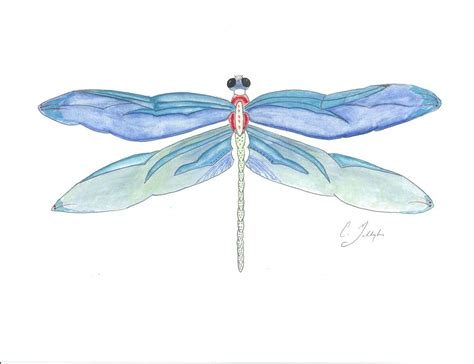 original dragonfly watercolor painting painting by