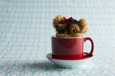 Boneka Peekaboo peekaboo http www klutz crafts pom pom puppies