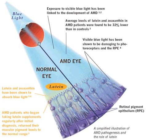blue light and macular degeneration sihatselalu lutein and zeaxanthin for the eyes