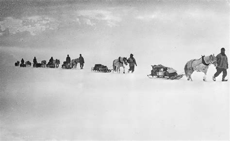 the south pole ponies robert falcon south pole the terra expedition