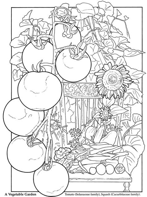 coloring pages for adults vegetables 500 best images about food drink and cooking coloring