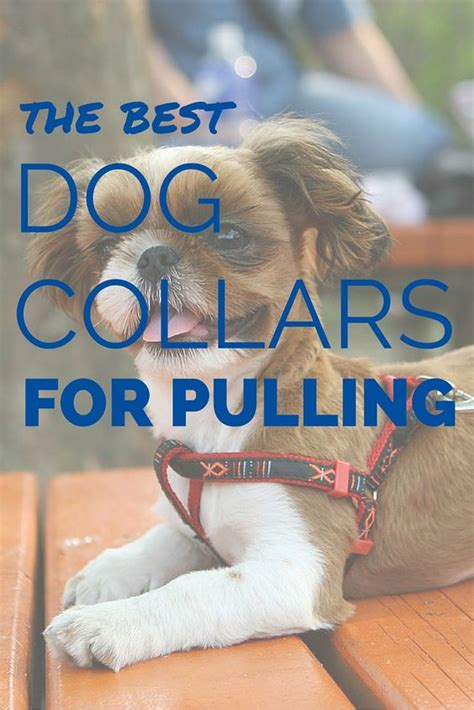 best collar for pulling 4 best collars for pulling reclaim the walk best dogs collars and collars