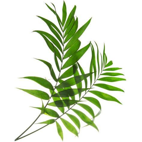 printable tropical leaves tropical leaf print green palm art palm art palm leaves
