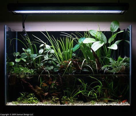 Aquascape Setup by Aquascape Riparium Style T A G