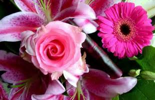 beautiful pictures beautiful pictures of flowers collection for free download