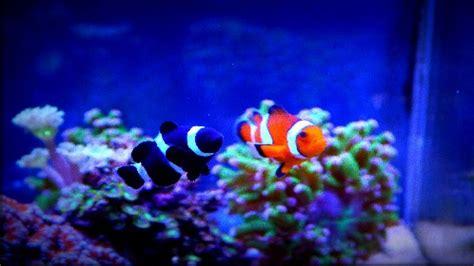 Reef Aquascaping Nano Meerwasseraquarien Vorschl 196 Ge F 220 R Fische Amp Korallen