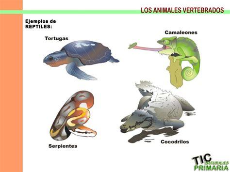 imagenes de animales vertebrados reptiles vertebrados