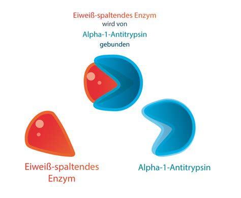 alpha 1 antitrypsin im stuhl was ist der alpha 1 antitrypsinmangel antworten hier