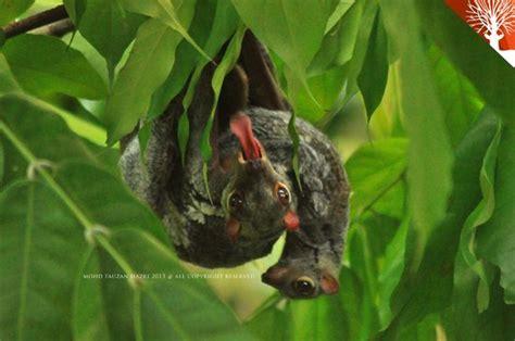 fauna flora eco langkawi malaysia address phone
