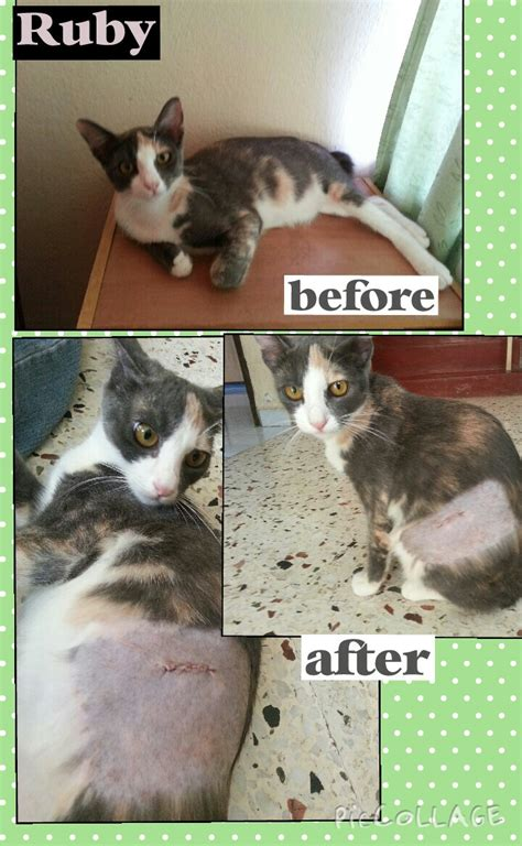 how will my be in after neutering neutering aid for 3 cats in sg petani basirah mohd ibrahim s animalcare