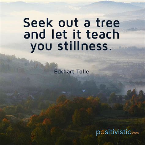 strength from nature simple lessons of taught by the most unlikely masters the nature teachers books quote on stillness eckhart tolle seek tree teaching