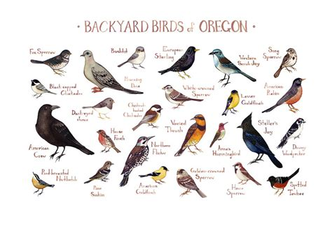 oregon backyard birds field guide art print watercolor