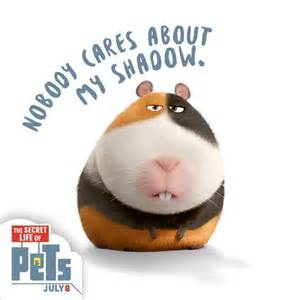 until next groundhog s day norman guinea pigs will need to petition for their own holiday