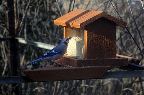 Types Of Feeders Hopper Feeder 2 Welcome Wildlife