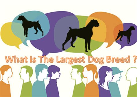 what is the largest breed 2 top the largest breed of pictures and names